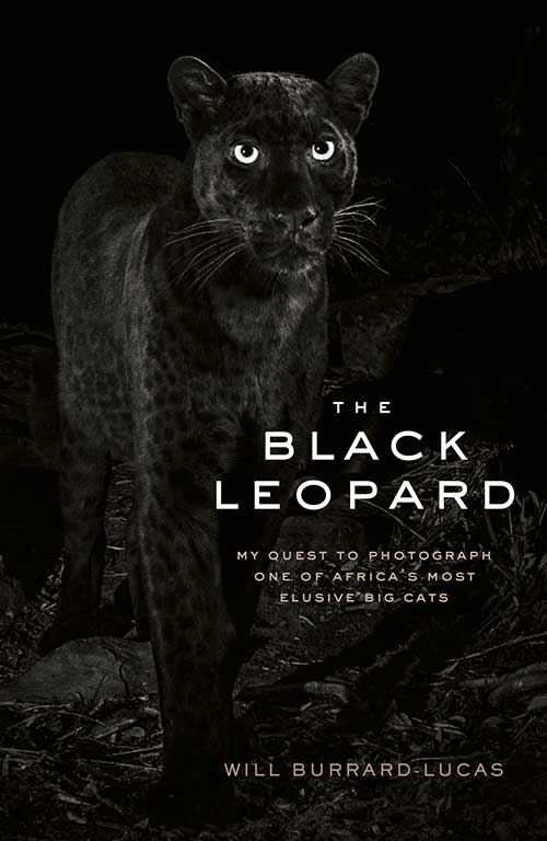 The Black Leopard : My quest to photograph one of Africa's most elusive big cats By Will Burrard-Lucas.